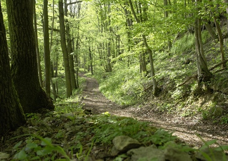 idyllic and peaceful forest track at spring time photo