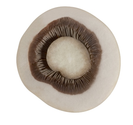 button mushroom: sliced button mushroom in white back Stock Photo