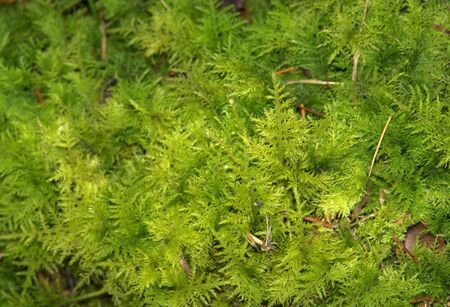 vegatation: green dense cover of vegatation with small moss leaves