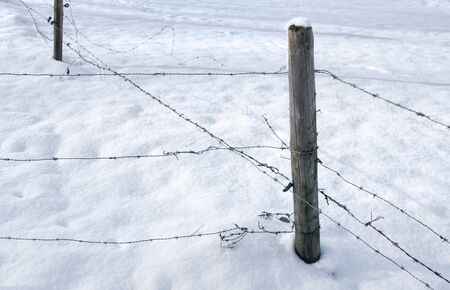 detail of a snowbound barbed wire fence photo
