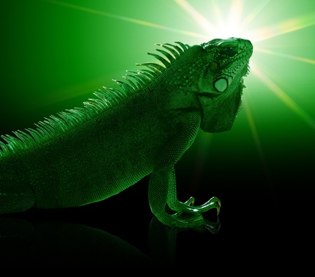 portrait of a Green Iguana in green toned mystic artificial ambiance Stock Photo