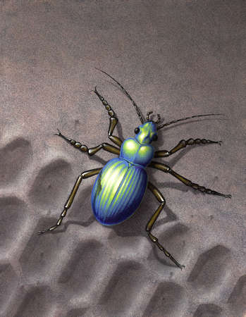 skidmark: Artwork of my own named Colosoma, painted with various techniques. It shows a iridescently beetle running over a skidmark in the sand