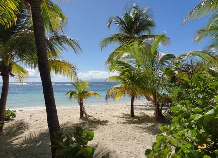 guadeloupe: idyllic coastal beach scenery on a caribbean island named Guadeloupe