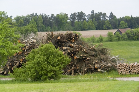 boughs: rural scenery including a big pile of cutted boughs in Southern Germany Stock Photo