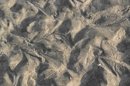 moistness: dettaglio di una zona intertidale visto in Francia
