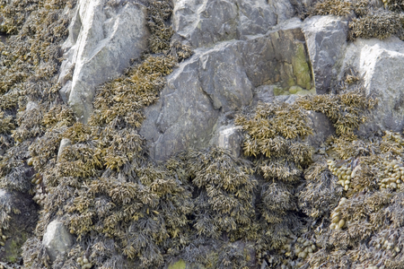 moistness: algae overgrown rock formation in Brittany  France  Stock Photo