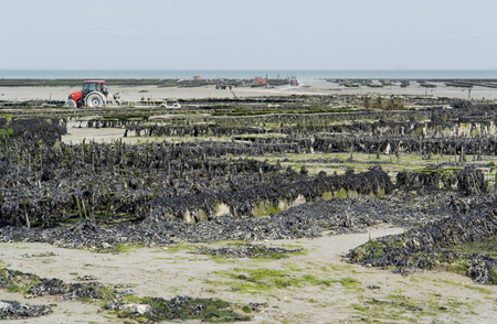 lots of oyster beds at a town in Brittany named Cancale photo