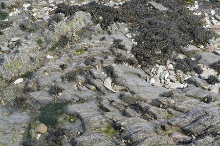moistness: alghe invaso formazione rocciosa in Bretagna, Francia