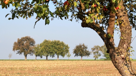 non cultivated: vespertine agriculture scenery at autumn time