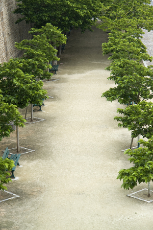 high angle shot: high angle shot of a avenue with trees in Brittany, France