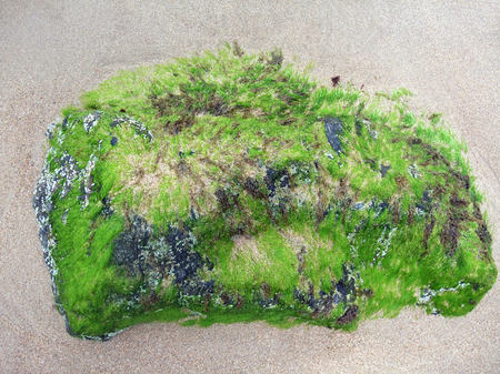 moistness: dettaglio costiera comprese quelle marine verde fresco e pietra, visto in Bretagna, Francia Archivio Fotografico