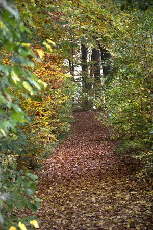 autumn scenery in a forest with footpath in southern germany photo