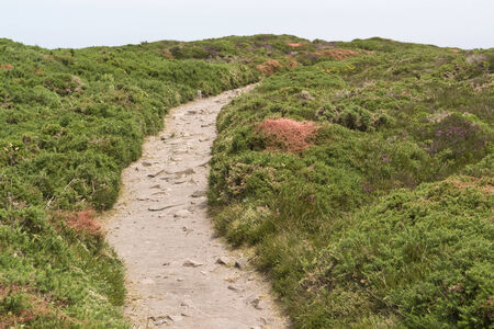 heathland: heathland with footpath at Cap Frehel in Brittany, France