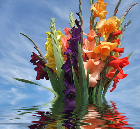 sinking bunch of gladioli flowers on reflective water surface in front of blue sky