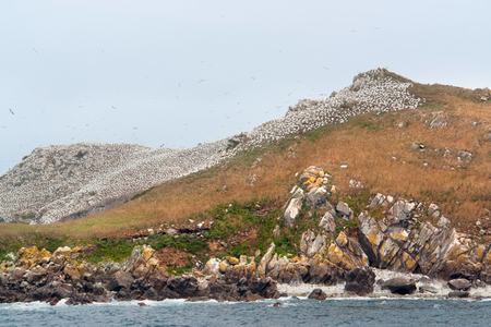 bird sanctuary: colorful rocky coastal scenery including a big bird sanctuary at the Seven Islands in Brittany, France
