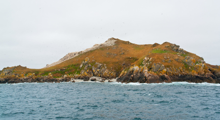 bird sanctuary: colorful overgrown rocky coastal scenery including a big bird sanctuary at the Seven Islands in Brittany, France