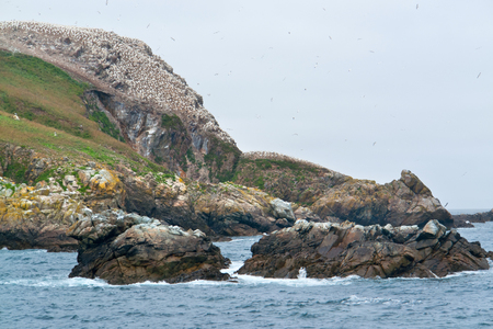 bird sanctuary: rocky coastal scenery including a huge bird sanctuary at the Seven Islands in Brittany, France