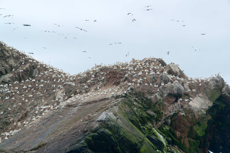 bird sanctuary: rocky coastal detail including a big bird sanctuary at the Seven Islands in Brittany, France Stock Photo