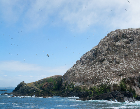 bird sanctuary: rocky coastal scenery including a big bird sanctuary at the Seven Islands in Brittany, France