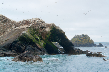 bird sanctuary: rocky clefty coastal scenery including a big bird sanctuary at the Seven Islands in Brittany, France