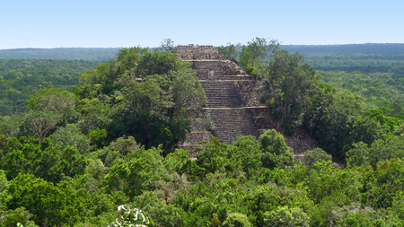 calakmul: overgrown temple at Calakmul, a mayan archaeological site in the mexican state of Campeche