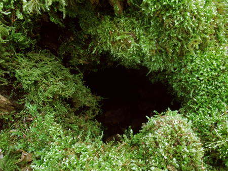 dense mats: detail of a moss overgrown hole Stock Photo