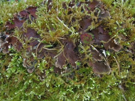 dense mats: detail of a mossy overgrown mushroom
