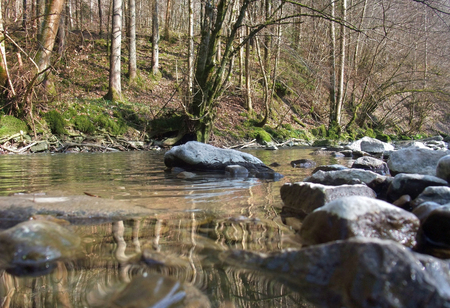 reflectance: idyllic scenery on a small river and forest in Southern Germany at early spring time