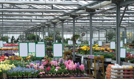 inside a greenhouse with lots of flowers photo