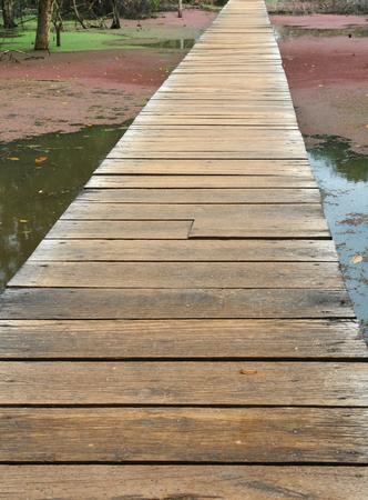 swampland: long wooden bridge over swampland seen in Thailand