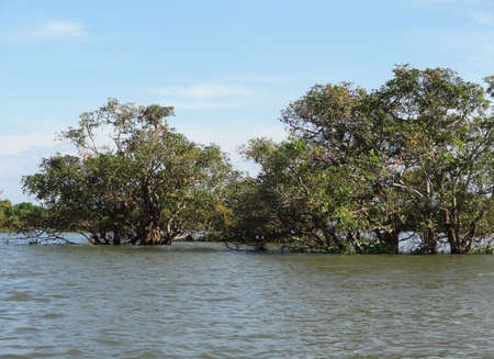 riparian: waterside flood scenery with trees at the Tonle Sap, a river in Cambodia
