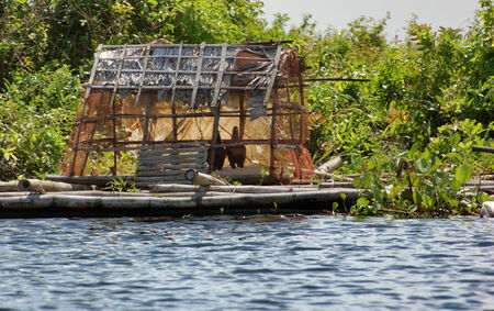 pile dwelling: waterside scenery with rural chicken house at the Tonle Sap, a river in Cambodia