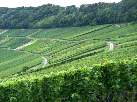 bowery: rural landscape with vineyards around Criesbach in Southern Germany named Kochertal