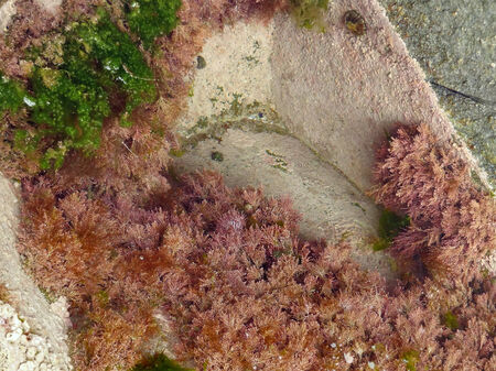 high angle ebb tide detail in Brittany, France photo