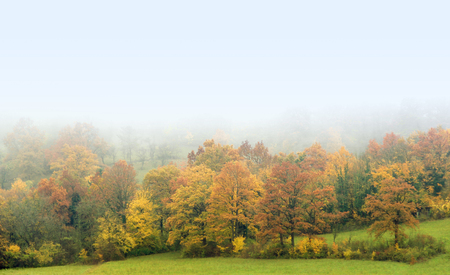 momentariness: foggy autumn scenery including a colorful forest in Southern Germany