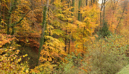 momentariness: detail of a colorful forest at autumn time in Southern Germany