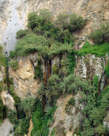nger: overgrown vegetation detail at Colca Canyon in Peru (South America)