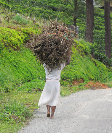 bowery: roadside scenery in Sri Lanka including a woman while carrying brushwood on her head Stock Photo