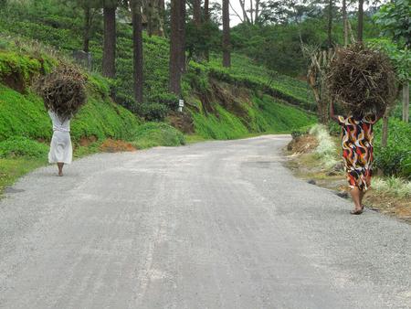 brushwood: roadside scenery in Sri Lanka Including two women while carrying brushwood On Their head