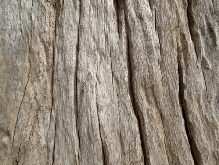 burl wood: full frame abstract weathered burl wood surface