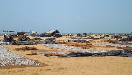 leavings: detail of a fish market at the beach with lots of fishes, remains and birds seen in Sri Lanka