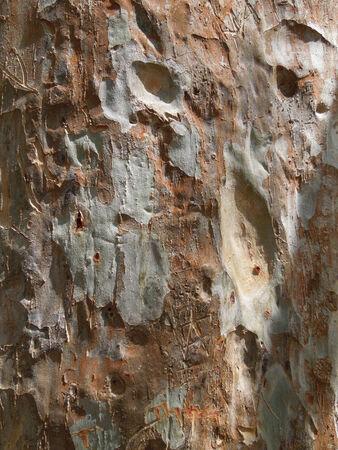 rundown: rundown bark detail seen in Sri Lanka