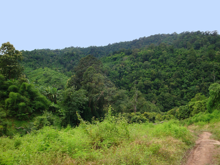 laotian: forest scenery seen in Laos, a country in South East Asia Stock Photo
