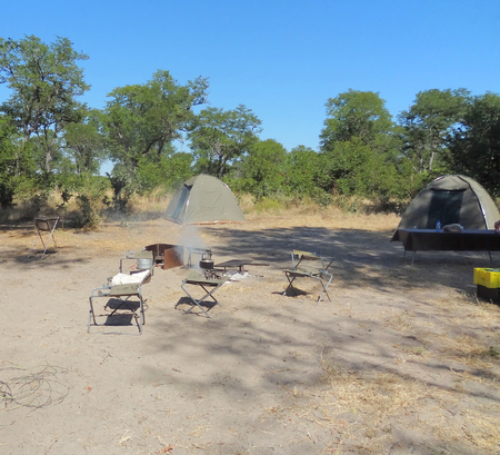 the game reserve: safari camp at the Moremi Game reserve in Botswana, Africa