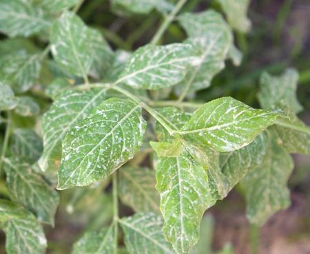 sprinkled: mud sprinkled green leaves