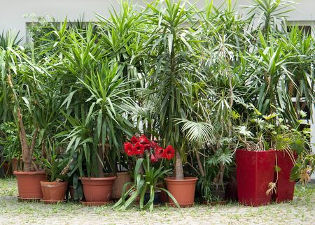 ambiance: lots of potted plants in sunny ambiance