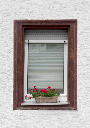 abloom: a window with closed sun blind and red flower in a pot
