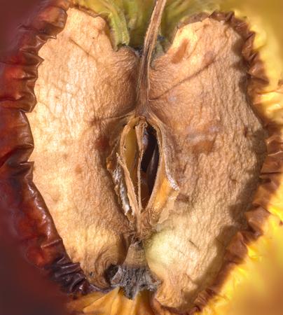 rotten: abstract rotten apple detail