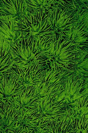 entanglement: full frame abstract leavy green background Stock Photo