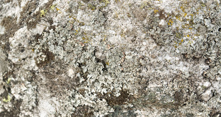 symbiosis: full frame abstract lichen background Stock Photo